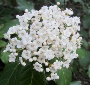 blossom along the walk