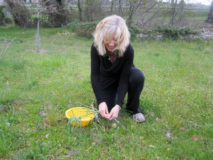 picking wild leeks 2
