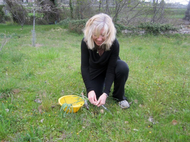 picking wild leeks 2