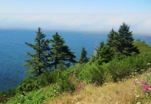 mist burning off - Oregon
