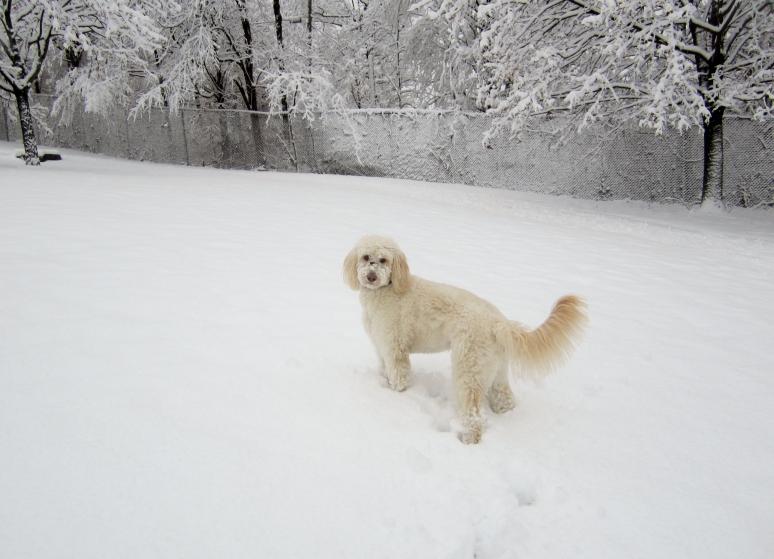 Snow dog2013