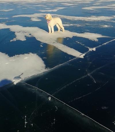 Lola on ice